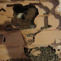 Il saggio visivo avea lo scopo di determinare la stratigrafia del tamponamento